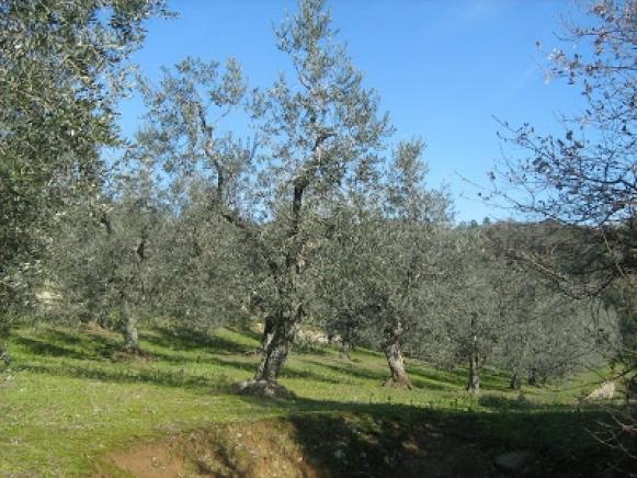 Pesaro - zona panoramica ardizio - rustico-casolare-cascina in vendita